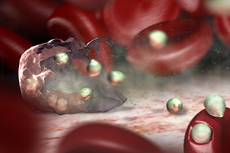 Malaria bursting from red blood cell