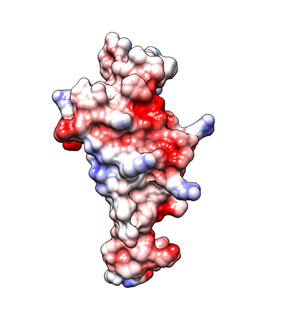 Molecular structure of protein