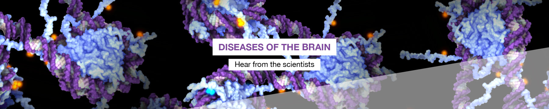 Diseases of the brain: hear from the scientists