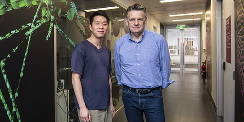 Professor Alan Cowman and Dr Wilson Wong