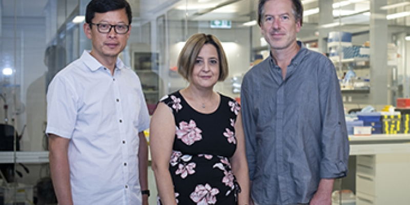 Associate Professor Wei Shi, Dr Diana Hansen and Professor Axel Kallies