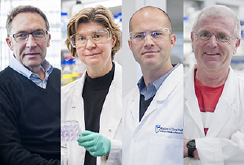 AAHMS recognition for Professor Ian Wicks, Professor Jane Visvader, Professor Benjamin Kile and Professor Andreas Strasser