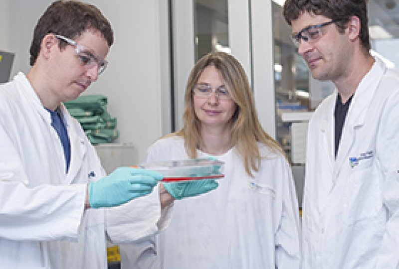 Cancer research team in the lab