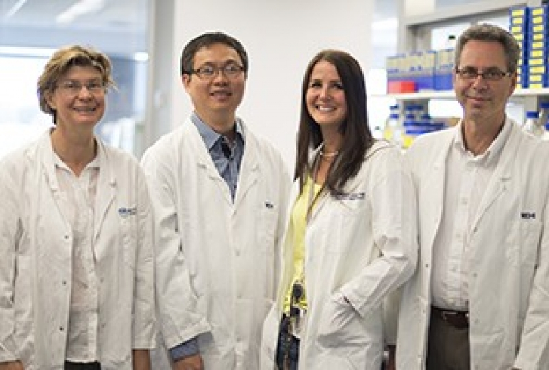 Professor Jane Visvader, Dr Nai Yang Fu, Dr Anne Rios and Professor Geoff Lindeman (left to right) in a lab