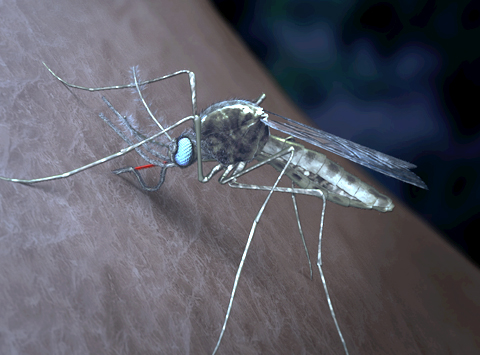 Image of mosquito generated by WEHI.TV