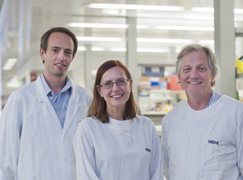 Immunology researchers in the lab